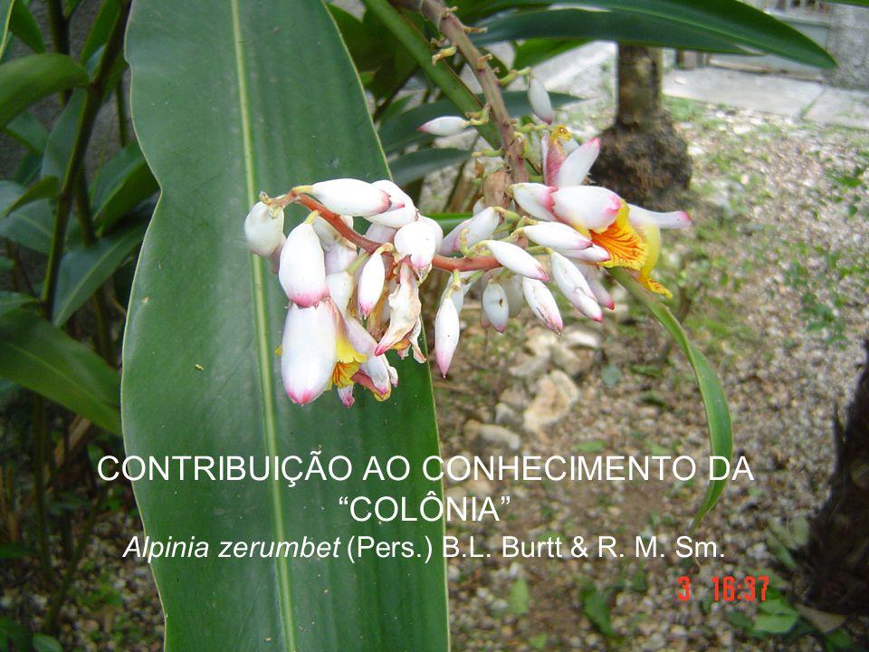 """CONTRIBUIÇÃO AO CONHECIMENTO DA """"COLÔNIA"""" Alpinia zerumbet (Pers.) B.L. Burtt & R. M. Sm."""
