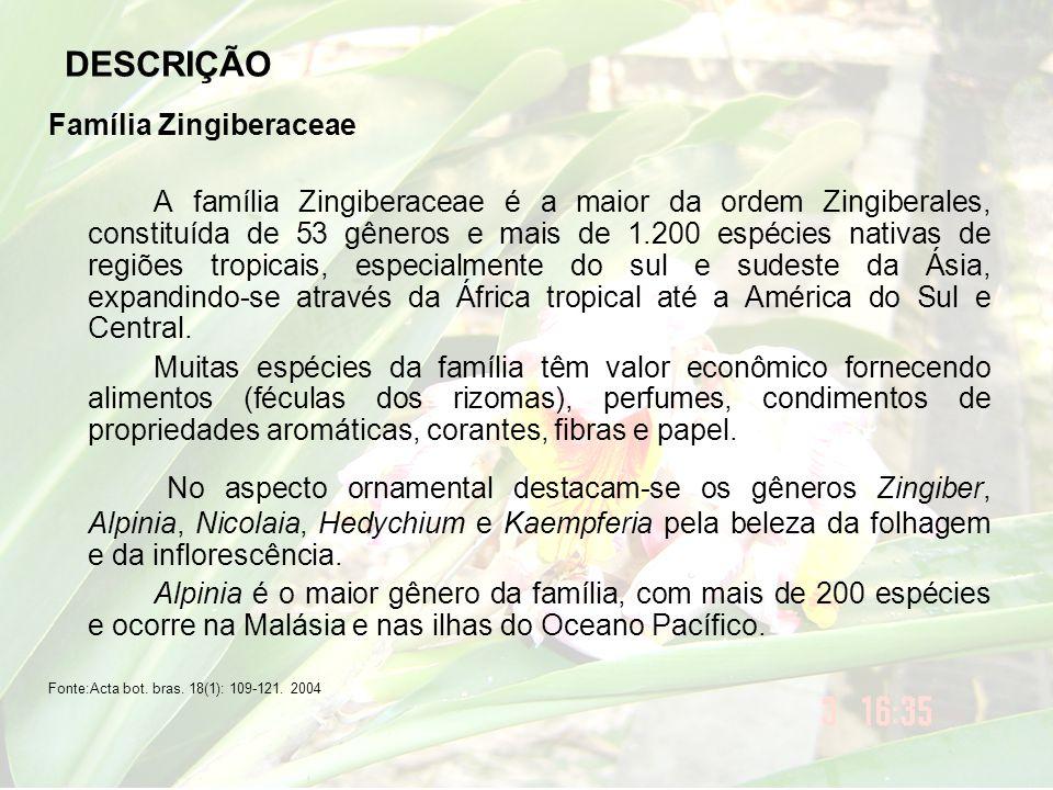 DESCRIÇÃO Família Zingiberaceae A família Zingiberaceae é a maior da ordem Zingiberales, constituída de 53 gêneros e mais de 1.200 espécies nativas de