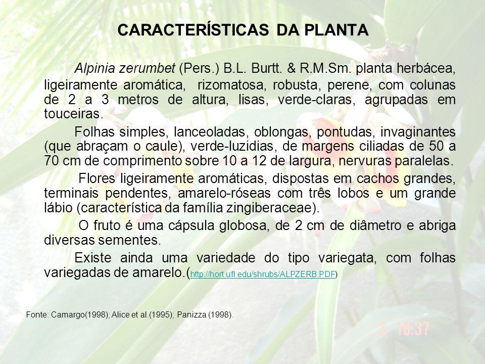 CARACTERÍSTICAS DA PLANTA Alpinia zerumbet (Pers.) B.L. Burtt. & R.M.Sm. planta herbácea, ligeiramente aromática, rizomatosa, robusta, perene, com col