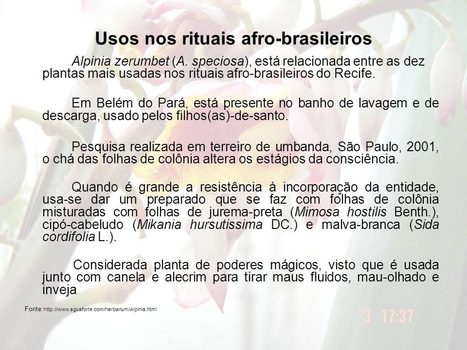 Usos nos rituais afro-brasileiros Alpinia zerumbet (A. speciosa), está relacionada entre as dez plantas mais usadas nos rituais afro-brasileiros do Re