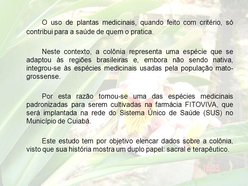 Usos nos rituais afro-brasileiros Alpinia zerumbet (A.