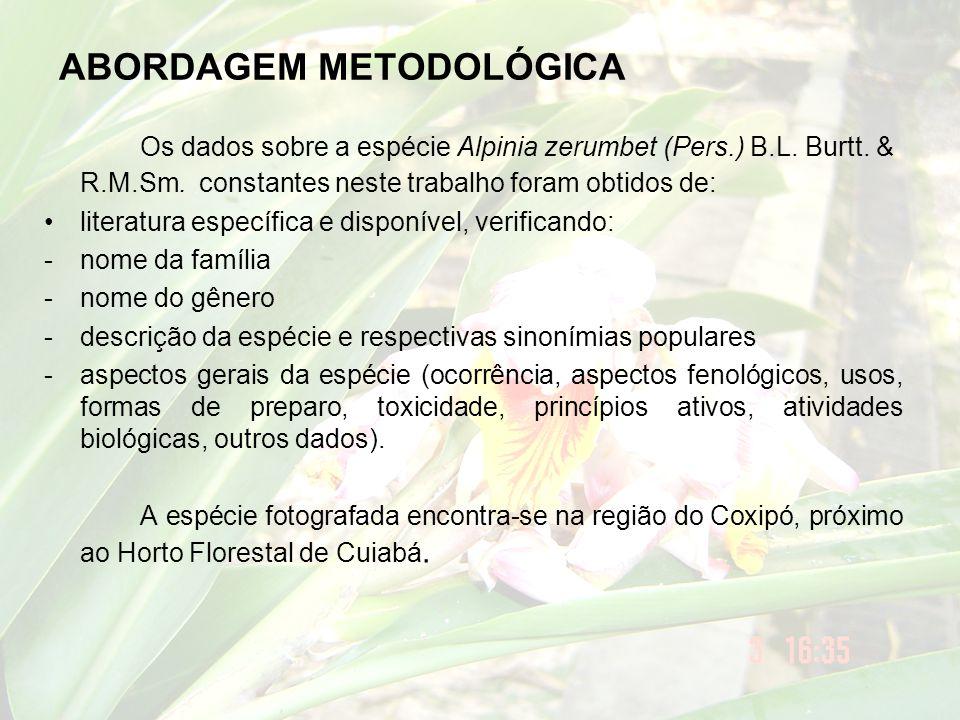 ASPECTOS GERAIS DA ESPÉCIE Sinonímia botânica •Zerumbet speciosum J.