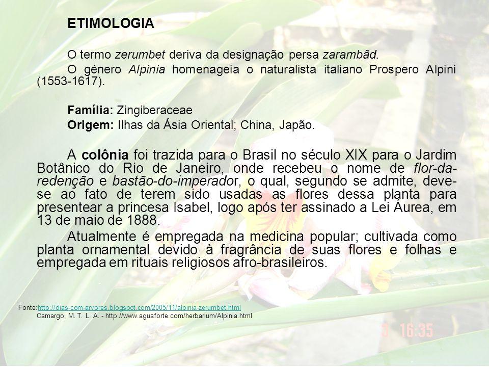 ETIMOLOGIA O termo zerumbet deriva da designação persa zarambãd. O género Alpinia homenageia o naturalista italiano Prospero Alpini (1553-1617). Famíl