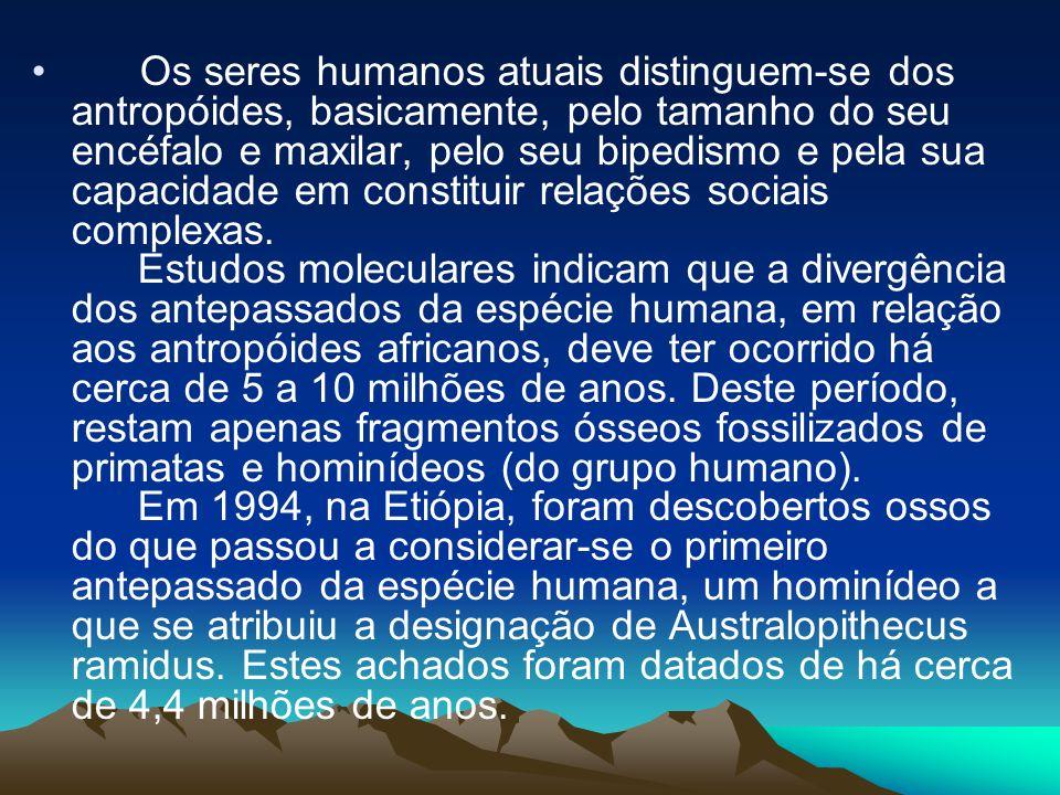 • Os seres humanos atuais distinguem-se dos antropóides, basicamente, pelo tamanho do seu encéfalo e maxilar, pelo seu bipedismo e pela sua capacidade