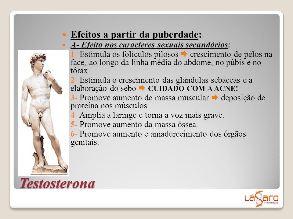 Testosterona  Efeitos a partir da puberdade:  A- Efeito nos caracteres sexuais secundários: 1- Estimula os folículos pilosos  crescimento de pêlos