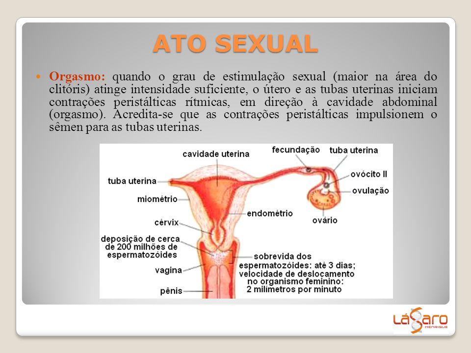 ATO SEXUAL  Orgasmo: quando o grau de estimulação sexual (maior na área do clitóris) atinge intensidade suficiente, o útero e as tubas uterinas inici