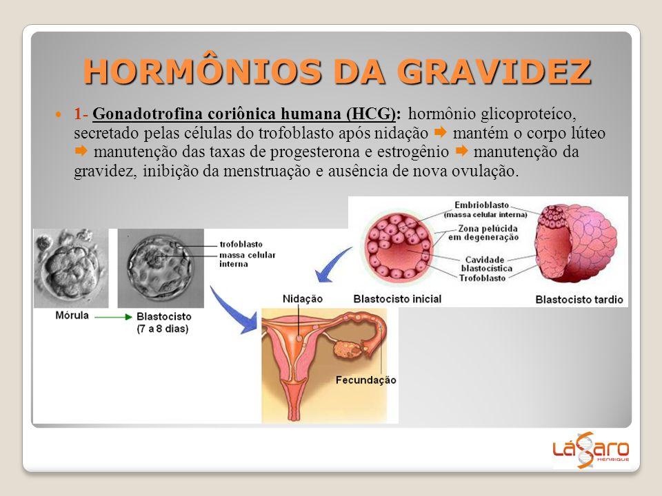 HORMÔNIOS DA GRAVIDEZ  1- Gonadotrofina coriônica humana (HCG): hormônio glicoproteíco, secretado pelas células do trofoblasto após nidação  mantém
