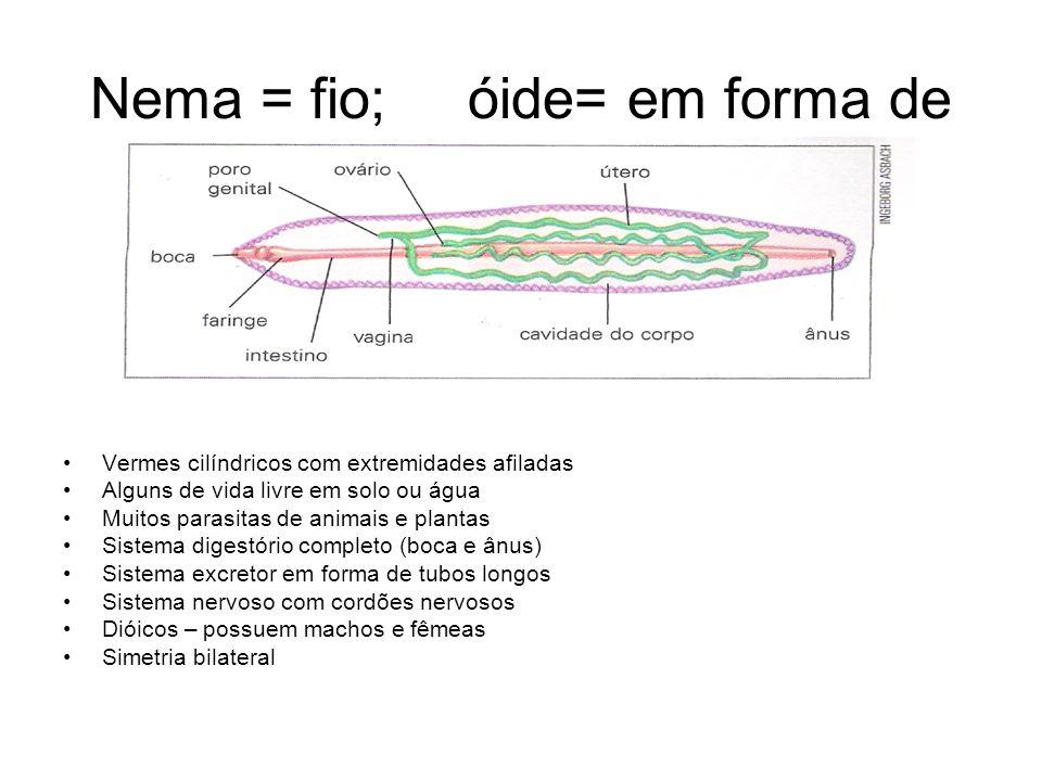 Nema = fio; óide= em forma de •Vermes cilíndricos com extremidades afiladas •Alguns de vida livre em solo ou água •Muitos parasitas de animais e plant