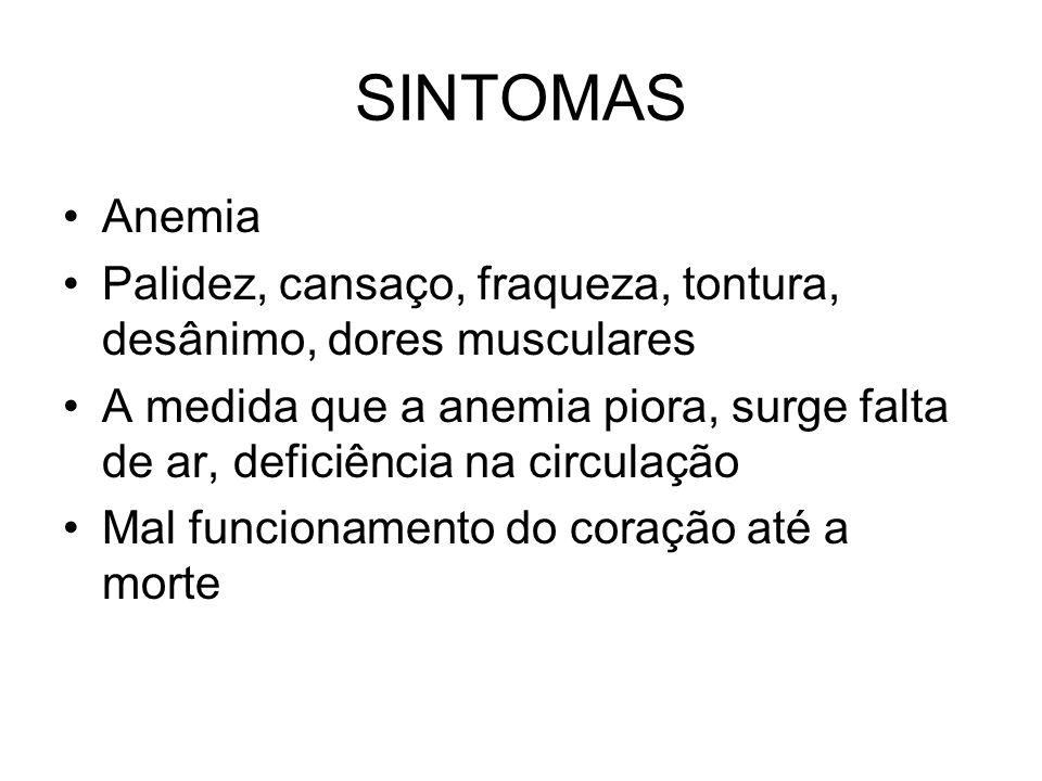 SINTOMAS •Anemia •Palidez, cansaço, fraqueza, tontura, desânimo, dores musculares •A medida que a anemia piora, surge falta de ar, deficiência na circ