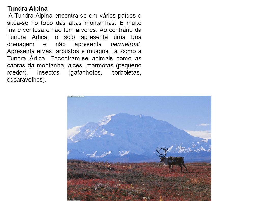 Tundra Alpina A Tundra Alpina encontra-se em vários países e situa-se no topo das altas montanhas. É muito fria e ventosa e não tem árvores. Ao contrá