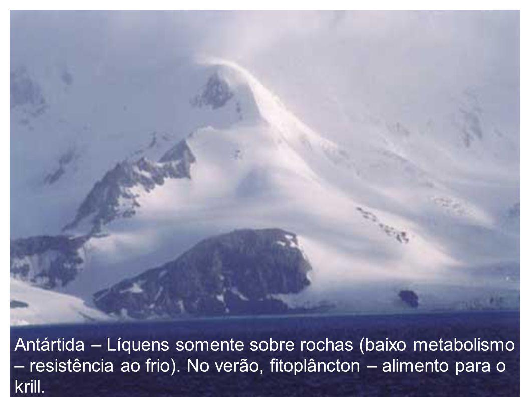 Antártida – Líquens somente sobre rochas (baixo metabolismo – resistência ao frio). No verão, fitoplâncton – alimento para o krill.