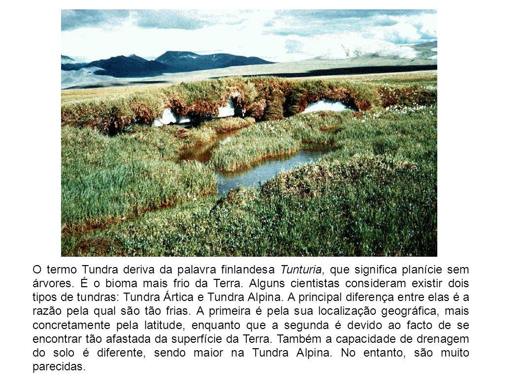 O termo Tundra deriva da palavra finlandesa Tunturia, que significa planície sem árvores. É o bioma mais frio da Terra. Alguns cientistas consideram e