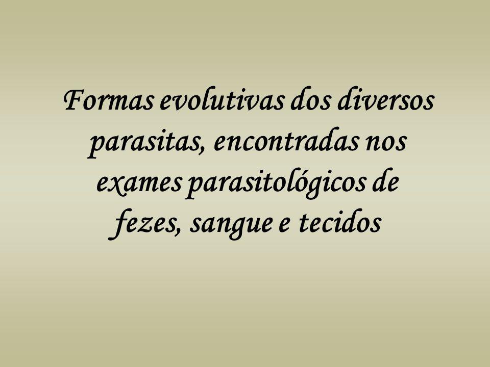 Formas evolutivas dos diversos parasitas, encontradas nos exames parasitológicos de fezes, sangue e tecidos