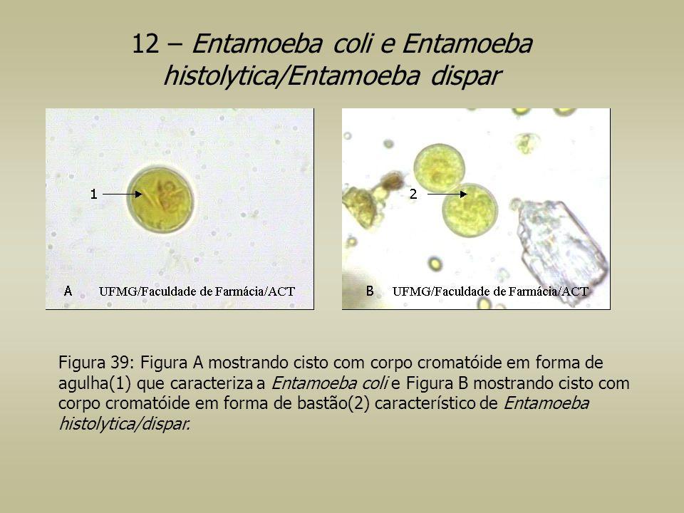 12 – Entamoeba coli e Entamoeba histolytica/Entamoeba dispar Figura 39: Figura A mostrando cisto com corpo cromatóide em forma de agulha(1) que caract