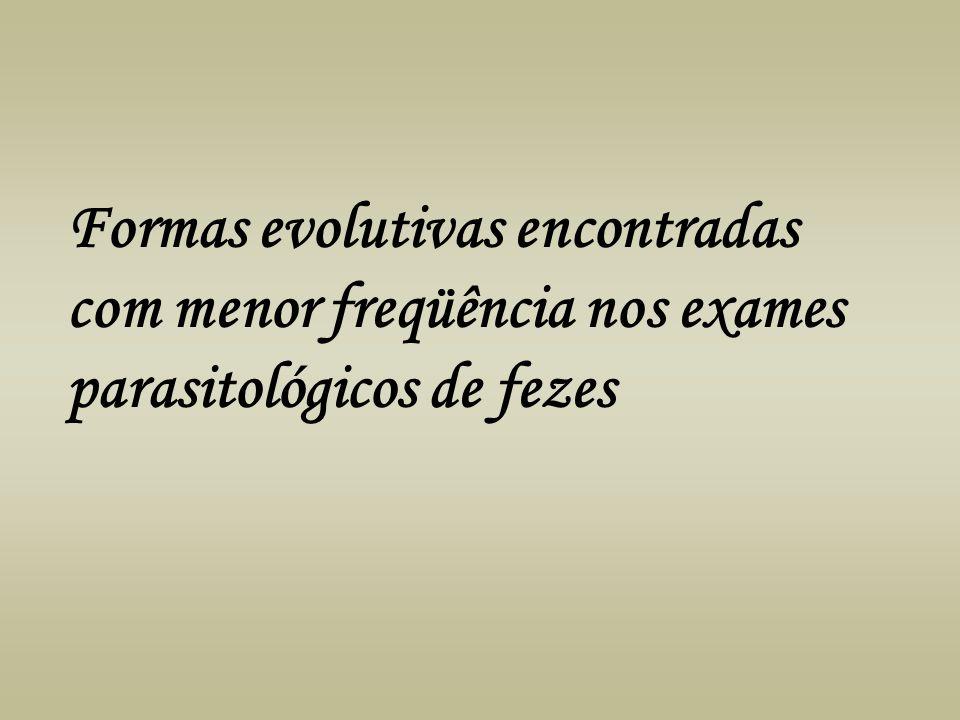 Formas evolutivas encontradas com menor freqüência nos exames parasitológicos de fezes