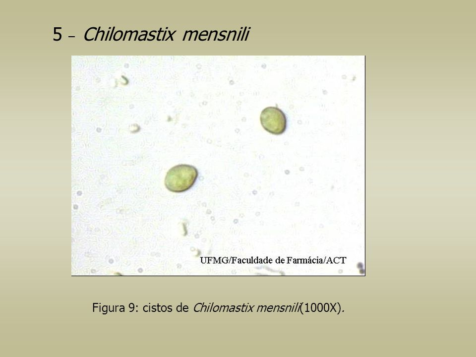 5 – Chilomastix mensnili Figura 9: cistos de Chilomastix mensnili(1000X).