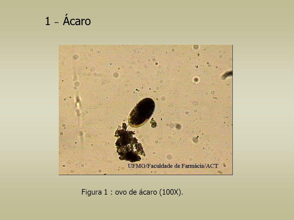 Figura 1 : ovo de ácaro (100X). 1 – Ácaro