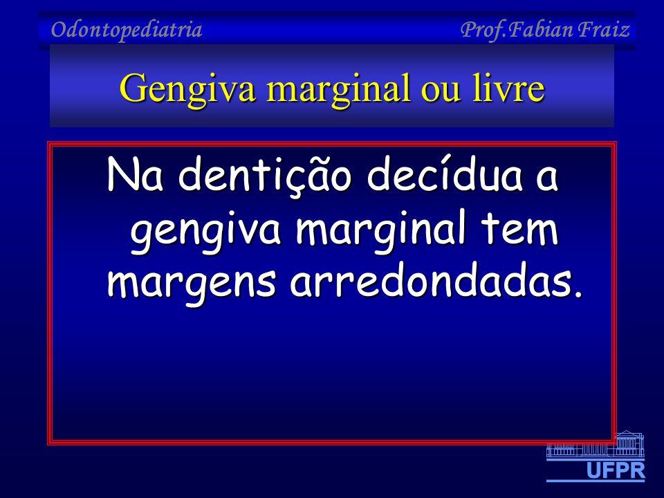 Odontopediatria Prof.Fabian Fraiz Gengiva marginal ou livre Na dentição decídua a gengiva marginal tem margens arredondadas.