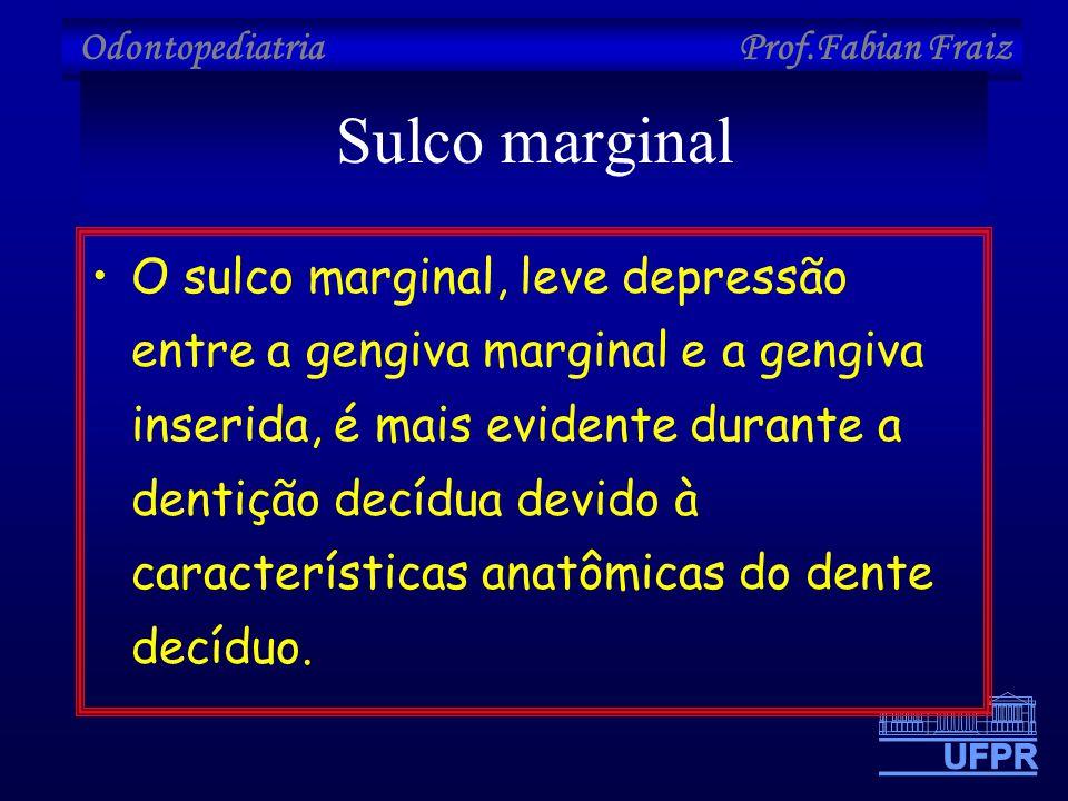 Odontopediatria Prof.Fabian Fraiz Sulco marginal •O sulco marginal, leve depressão entre a gengiva marginal e a gengiva inserida, é mais evidente dura