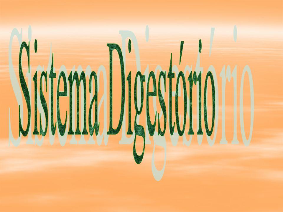 Sistema Digestório Funções Gerais:  Transformação de macronutrientes e micronutrientes.