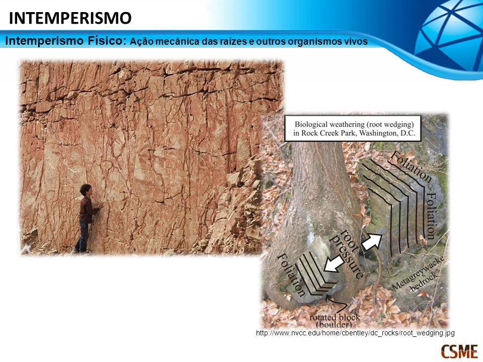 Intemperismo Físico: Ação mecânica das raízes e outros organismos vivos INTEMPERISMO http://www.nvcc.edu/home/cbentley/dc_rocks/root_wedging.jpg