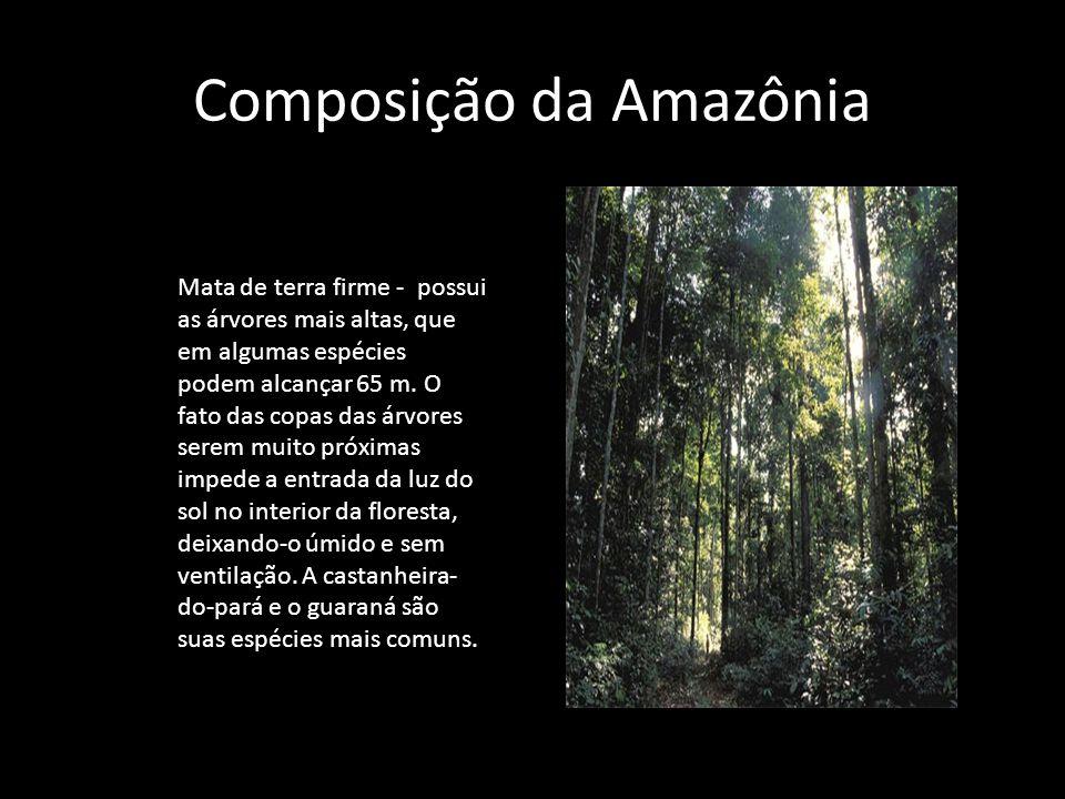 Composição da Amazônia Mata de terra firme - possui as árvores mais altas, que em algumas espécies podem alcançar 65 m. O fato das copas das árvores s