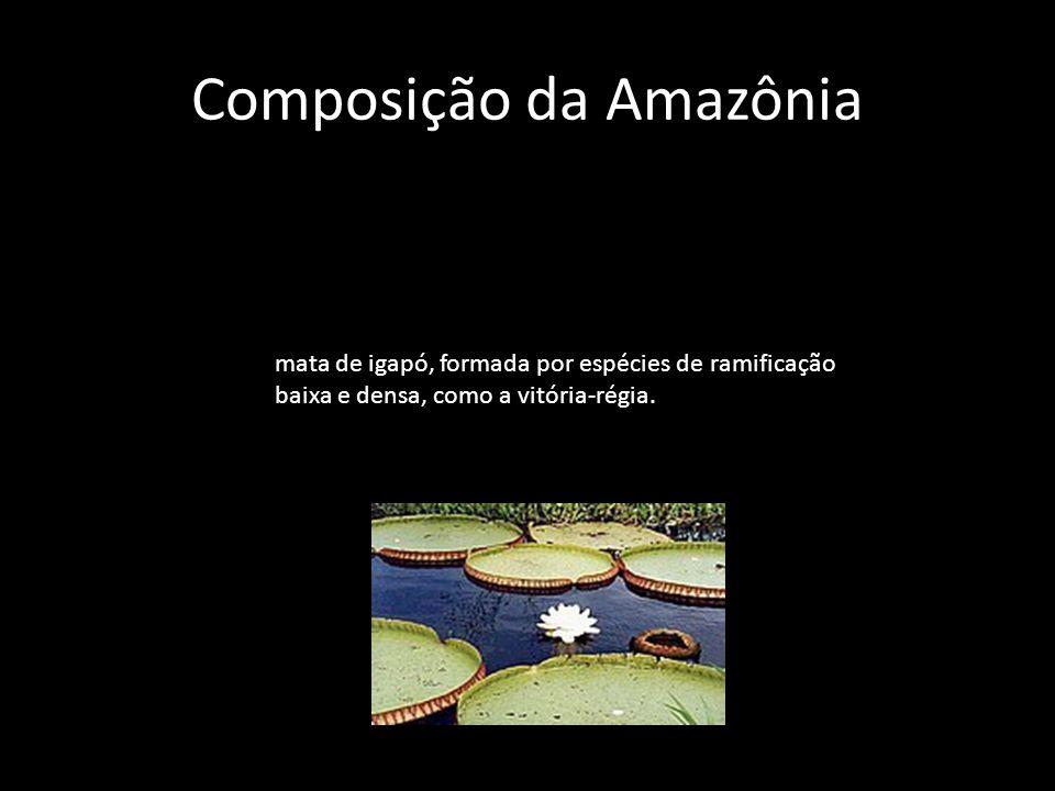 Composição da Amazônia mata de várzea é um tipo de transição entre as duas primeiras, cuja composição varia de acordo com a proximidade dos rios.