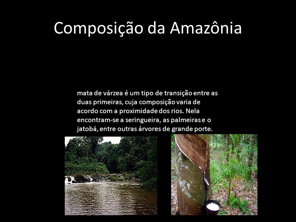 Composição da Amazônia mata de várzea é um tipo de transição entre as duas primeiras, cuja composição varia de acordo com a proximidade dos rios. Nela