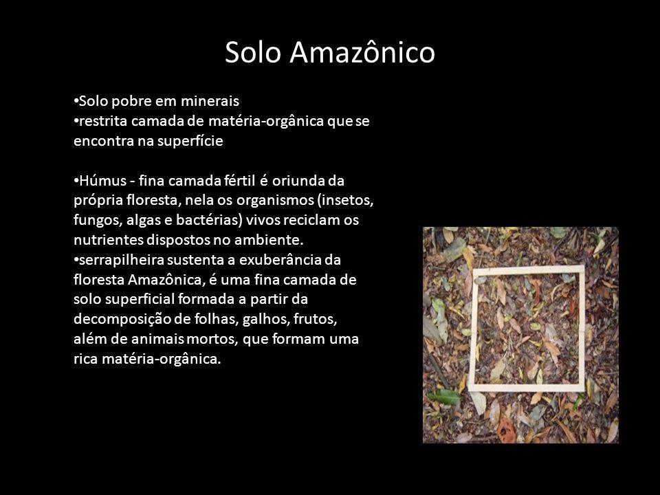 Solo Amazônico • Solo pobre em minerais • restrita camada de matéria-orgânica que se encontra na superfície • Húmus - fina camada fértil é oriunda da