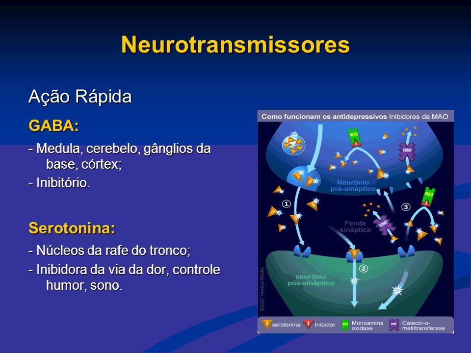Neurotransmissores Ação Rápida GABA: - Medula, cerebelo, gânglios da base, córtex; - Inibitório. Serotonina: - Núcleos da rafe do tronco; - Inibidora