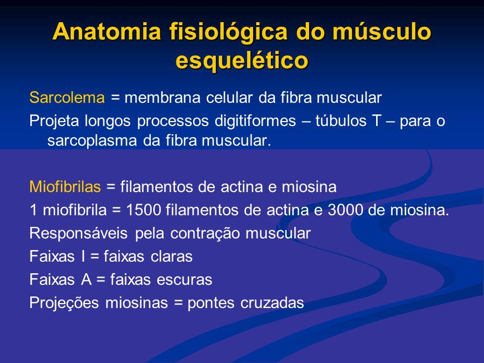 Sarcolema = membrana celular da fibra muscular Projeta longos processos digitiformes – túbulos T – para o sarcoplasma da fibra muscular. Miofibrilas =