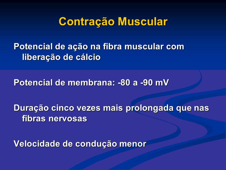 Contração Muscular Potencial de ação na fibra muscular com liberação de cálcio Potencial de membrana: -80 a -90 mV Duração cinco vezes mais prolongada