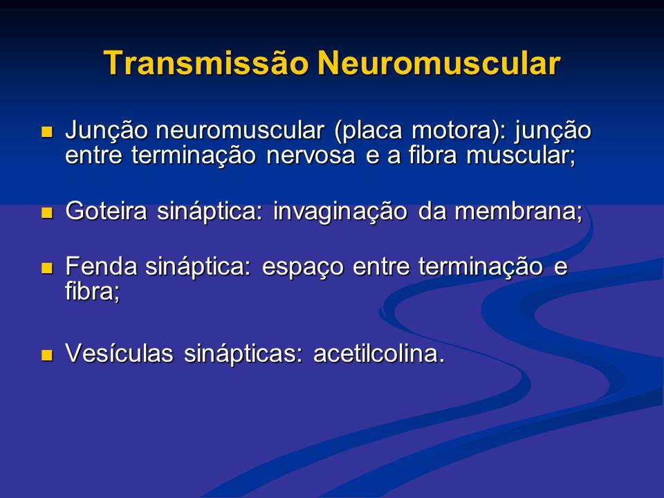 Transmissão Neuromuscular  Junção neuromuscular (placa motora): junção entre terminação nervosa e a fibra muscular;  Goteira sináptica: invaginação