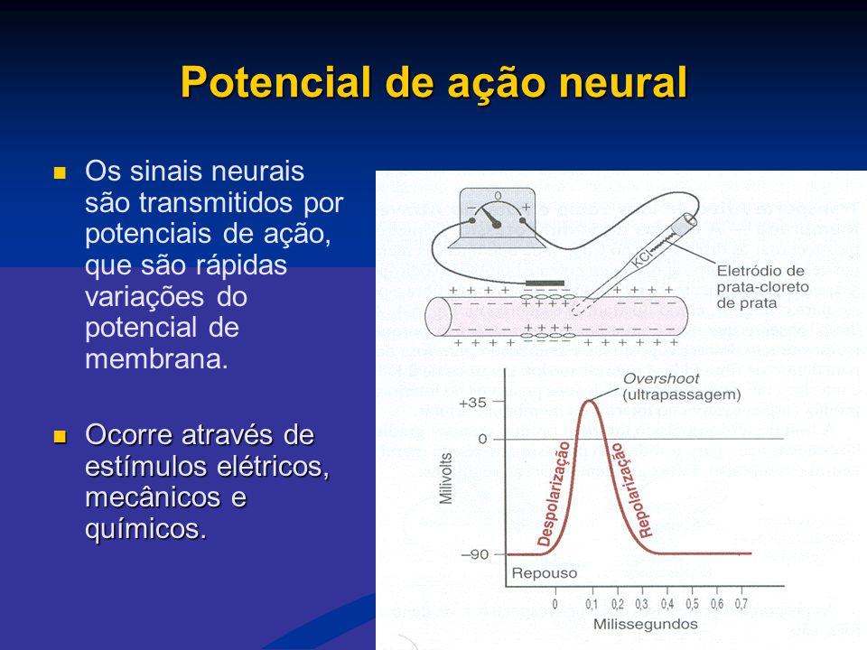 Potencial de ação neural   Os sinais neurais são transmitidos por potenciais de ação, que são rápidas variações do potencial de membrana.  Ocorre a