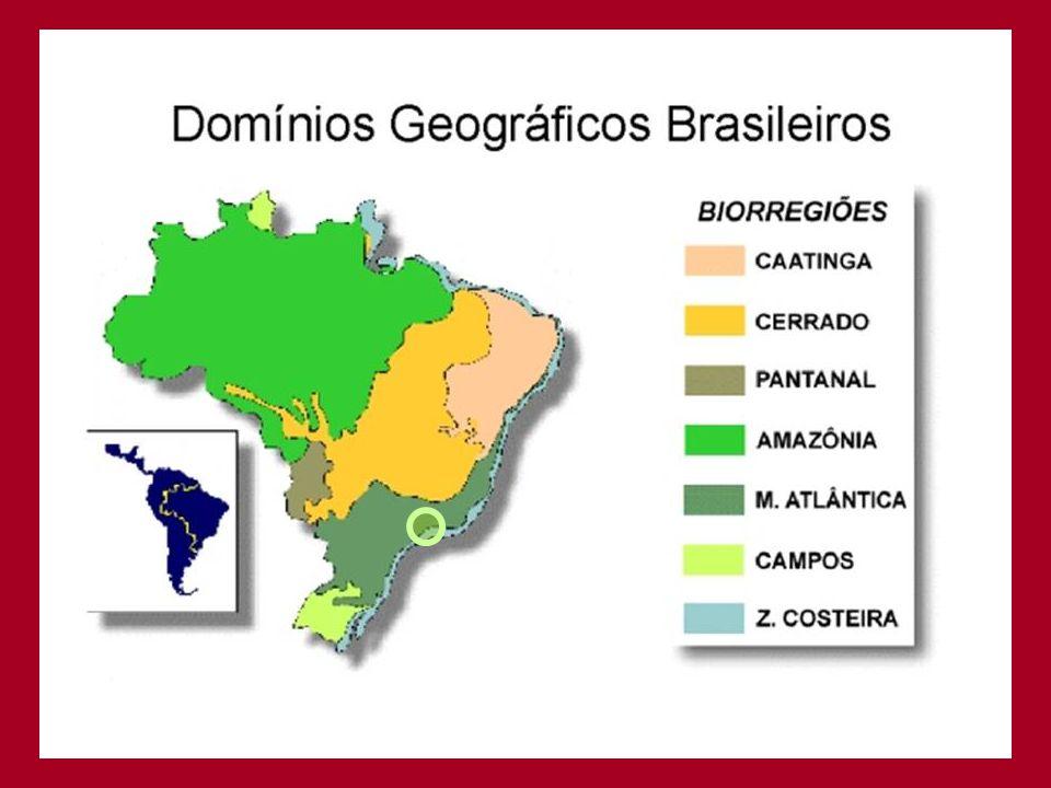 Idéias: •Analisar energeticamente os subsistemas de Barão Geraldo: áreas de preservação e áreas que por lei devem ser recuperadas, áreas rurais dedicadas a agricultura, pecuária e silvicultura, áreas urbanas para moradia, industria e serviços.