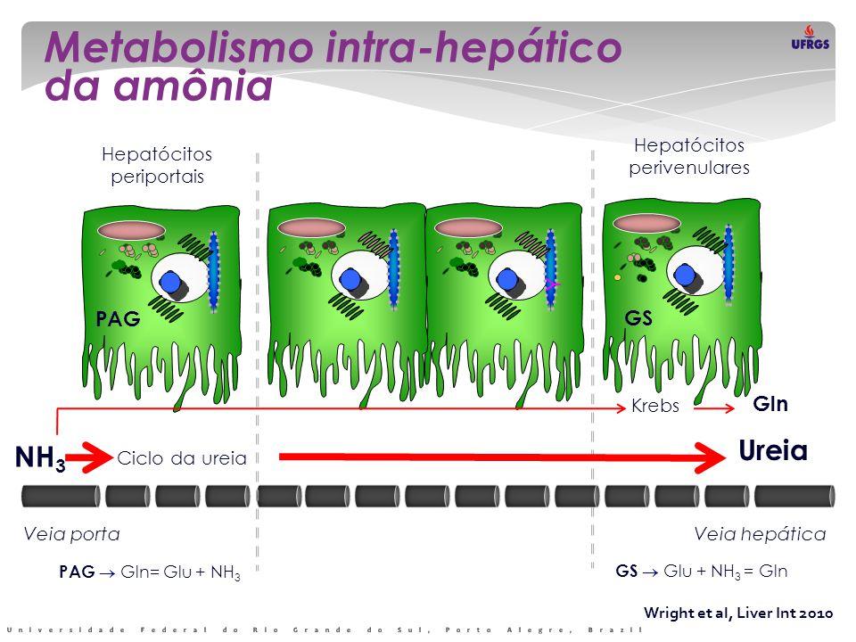 Wright et al, Liver Int 2010 Metabolismo intra-hepático da amônia Y Y Hepatócitos periportais Hepatócitos perivenulares NH 3 Ciclo da ureia Ureia PAG GS Krebs Gln NH 3 Shunts PS