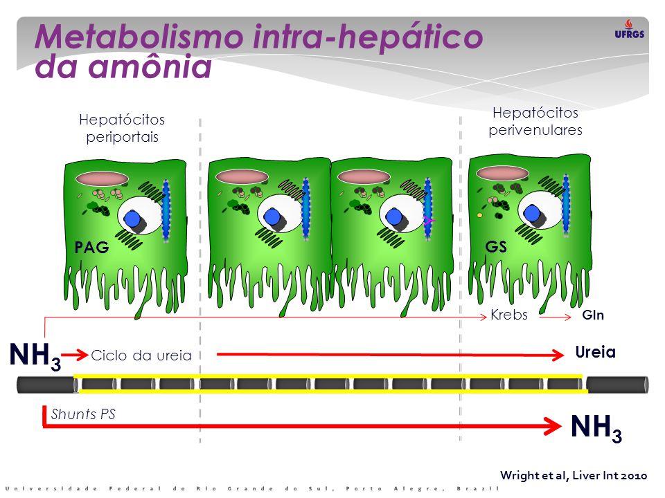 Wright et al, Liver Int 2010 Metabolismo intra-hepático da amônia Y Y Hepatócitos periportais Hepatócitos perivenulares NH 3 Ciclo da ureia Ureia PAG