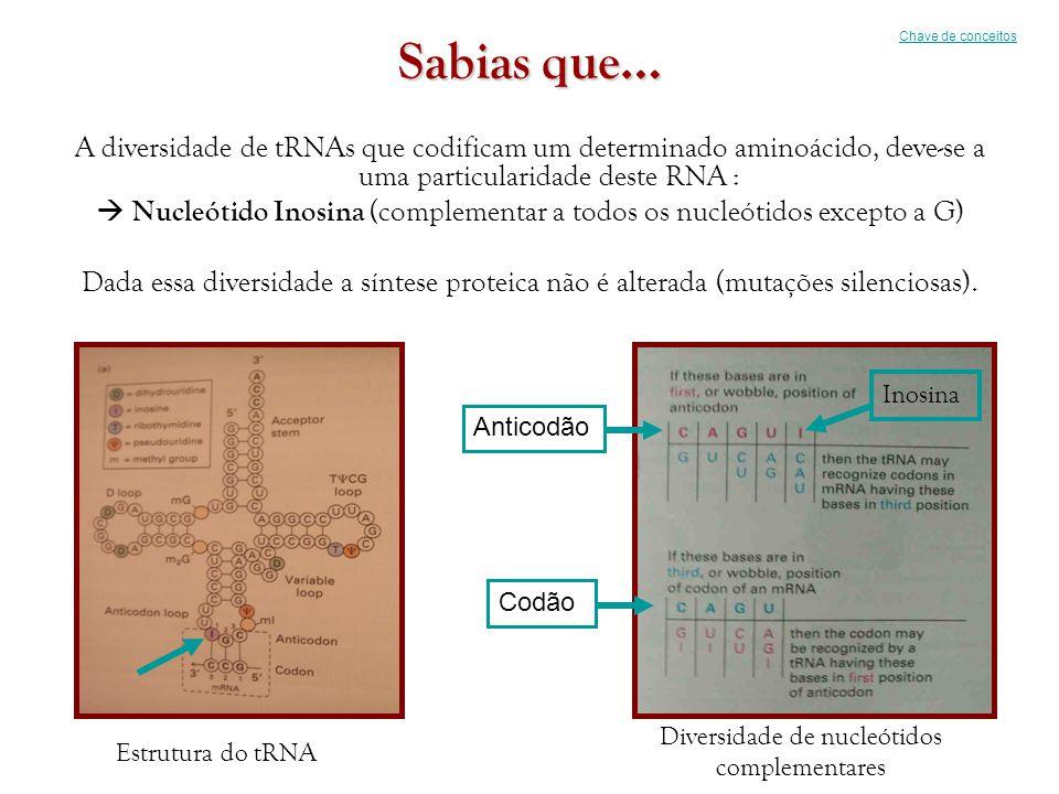 Sabias que… A diversidade de tRNAs que codificam um determinado aminoácido, deve-se a uma particularidade deste RNA :  Nucleótido Inosina (complement