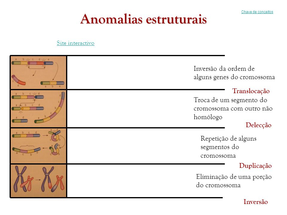 Anomalias estruturais Site interactivo Chave de conceitos Eliminação de uma porção do cromossoma Inversão da ordem de alguns genes do cromossoma Troca