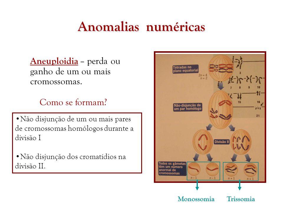 Anomalias numéricas Aneuploidia – perda ou ganho de um ou mais cromossomas. TrissomiaMonossomia •Não disjunção de um ou mais pares de cromossomas homó