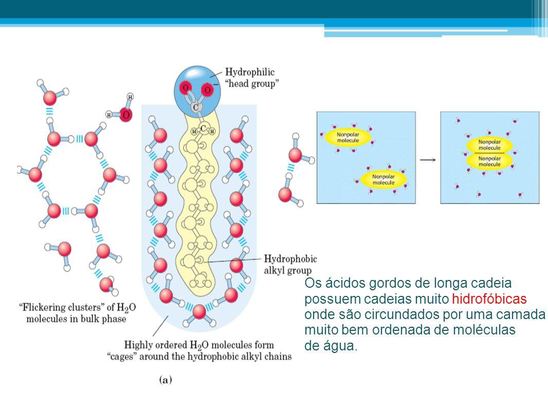 Os ácidos gordos de longa cadeia possuem cadeias muito hidrofóbicas onde são circundados por uma camada muito bem ordenada de moléculas de água.