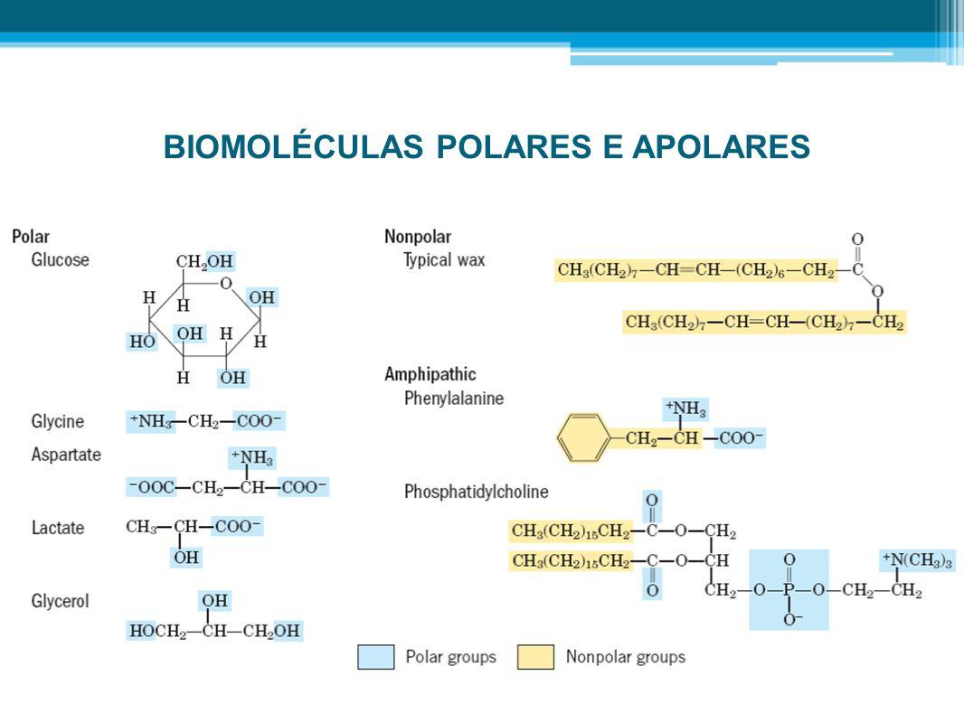 BIOMOLÉCULAS POLARES E APOLARES