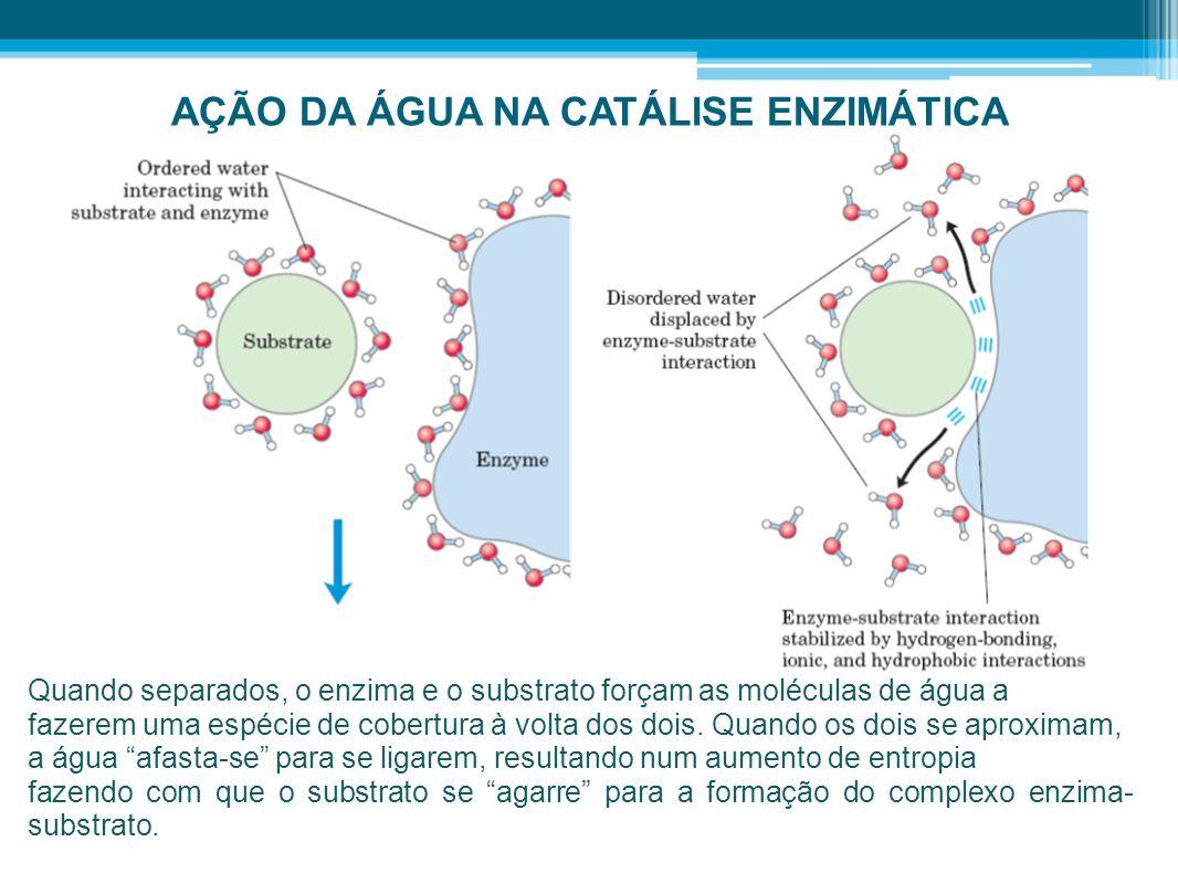 AÇÃO DA ÁGUA NA CATÁLISE ENZIMÁTICA Quando separados, o enzima e o substrato forçam as moléculas de água a fazerem uma espécie de cobertura à volta do