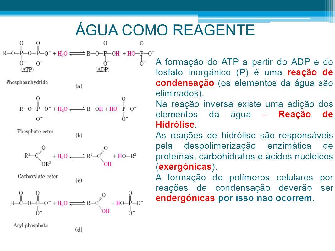 ÁGUA COMO REAGENTE A formação do ATP a partir do ADP e do fosfato inorgânico (P) é uma reação de condensação (os elementos da água são eliminados). Na