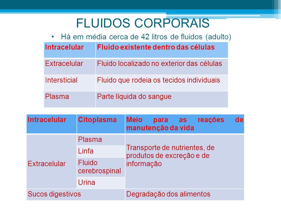 •Há em média cerca de 42 litros de fluidos (adulto) IntracelularFluido existente dentro das células ExtracelularFluido localizado no exterior das célu
