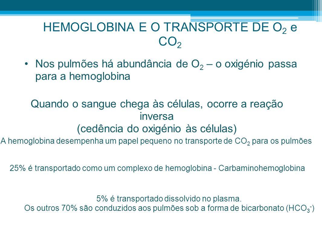 HEMOGLOBINA E O TRANSPORTE DE O 2 e CO 2 •Nos pulmões há abundância de O 2 – o oxigénio passa para a hemoglobina Quando o sangue chega às células, oco