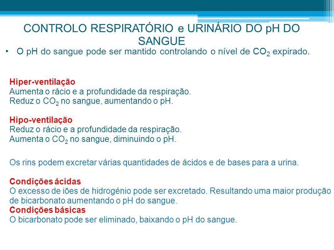 CONTROLO RESPIRATÓRIO e URINÁRIO DO pH DO SANGUE •O pH do sangue pode ser mantido controlando o nível de CO 2 expirado. Hiper-ventilação Aumenta o rác