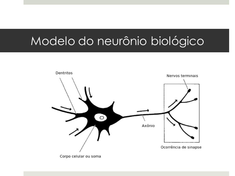 Fluxo de informação  A soma e os dendritos forma a superfície de entrada do neurônio e o axônio forma a superfície de saída da informação.