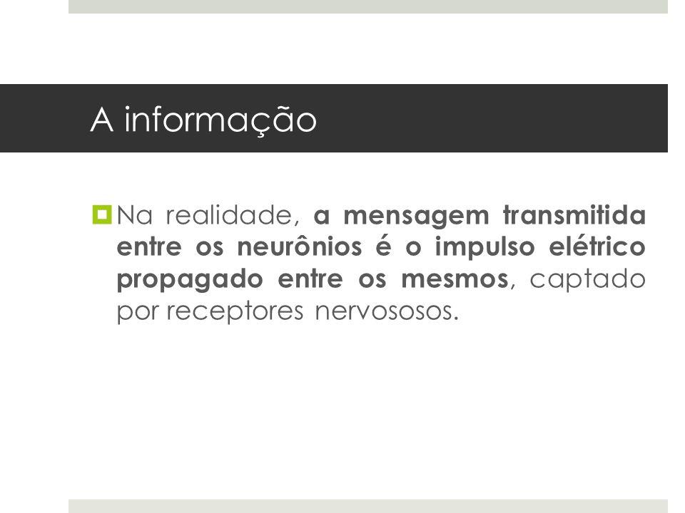A informação  Na realidade, a mensagem transmitida entre os neurônios é o impulso elétrico propagado entre os mesmos, captado por receptores nervosos