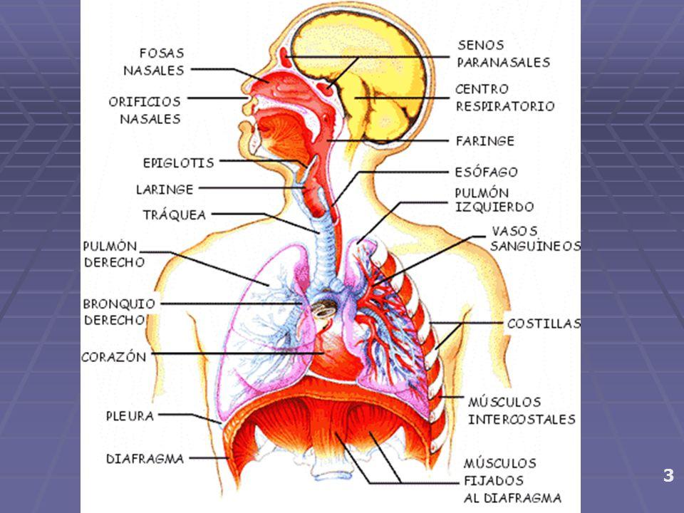 EXERCÍCIOS RESPIRATÓRIOS desenvolvimento da potencia respiratória e dos limites EXERCÍCIOS CORPORAIS relaxamentos e alongamentos Procedimento para AQUECIMENTO VOCAL Procedimento para AQUECIMENTO VOCAL EXERCÍCIOS SONORIZADOS Impostação, nuances vocais e timbrísticas 4